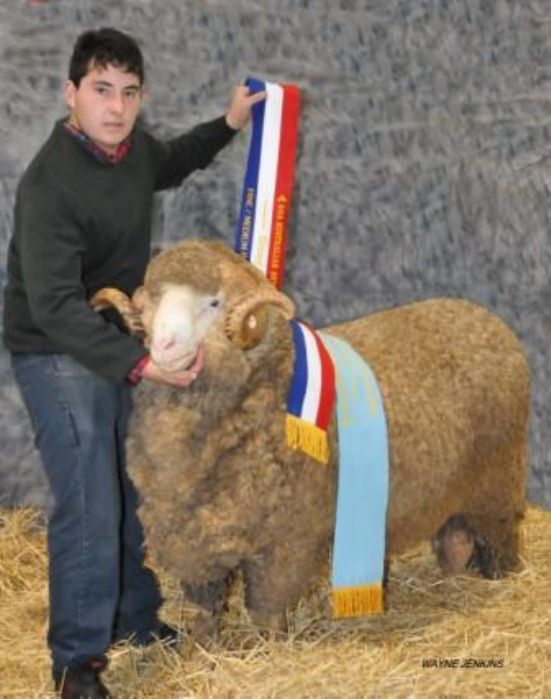 JACK%20MCRAE%20OAKBANK%20%20WITH%20THE%20GRAND%20CHAMPION%20FINE%20%20MEDIUM%20RAM%20OF%20THE%20SHOW.JPG