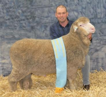 WARREN RUSSELL WITH THE SUPREME CHAMPION SUPERFINE WOOL POLL MERINO RAM.JPG